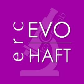 EVO HAFT