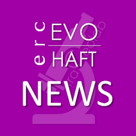 ERCEVOHAFT NEWS